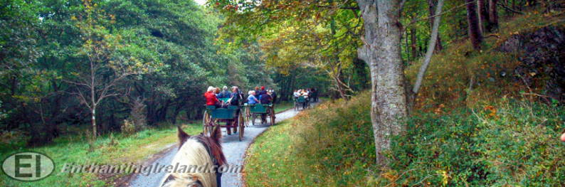 Experience the Killarney National Park Irish Jaunting Cars -  Things To Do; County Kerry; Killarney;